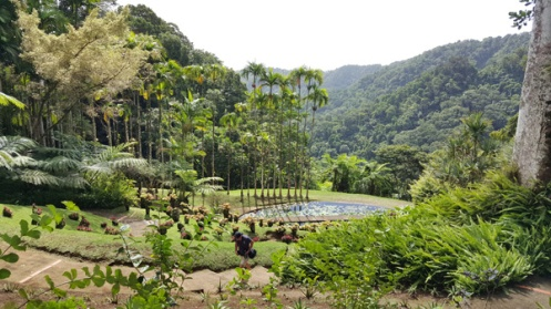 Jardin de balata the life of hardip for Jardin balata